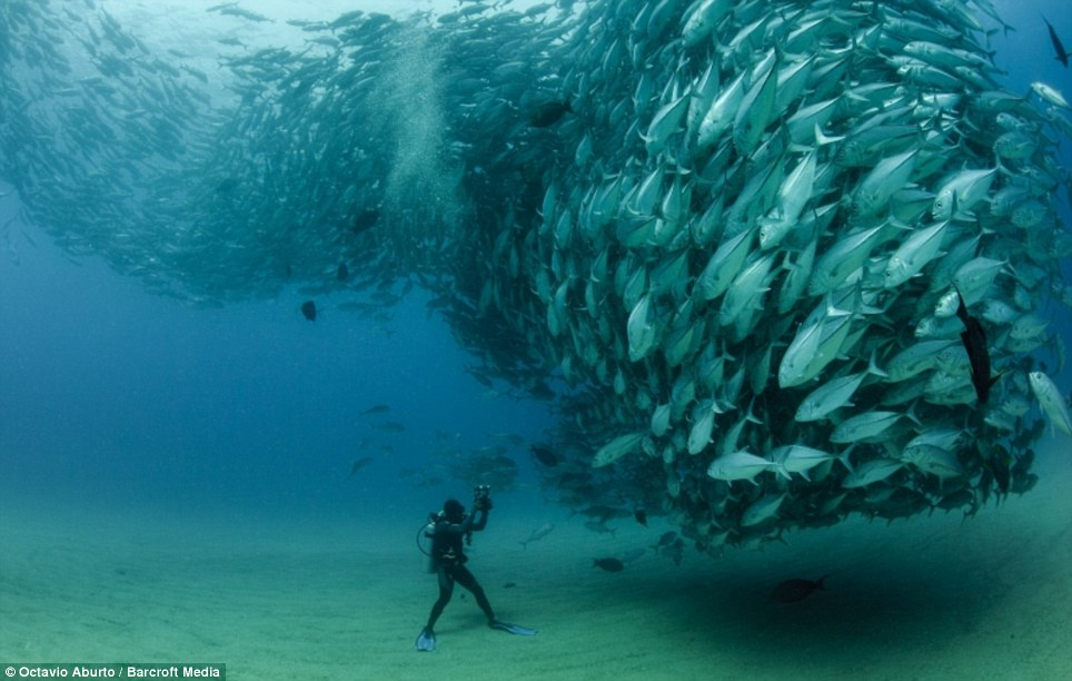 Image result for underwater photo awards