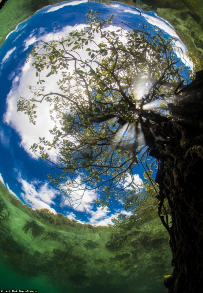 Hamid Rad won best in show with his portrait of a fish-eye view of the world.