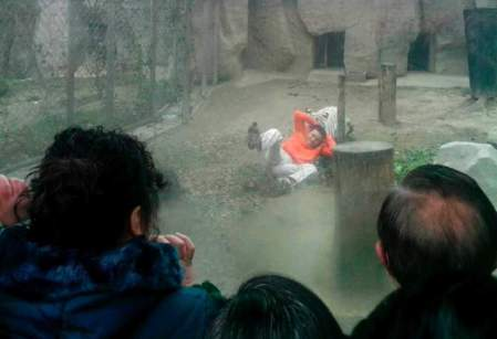 A female Bengali white tiger drags a man by his shirt after the man climbed into the enclosure, at a zoo in Chengdu, Sichuan province February 16, 2014.
